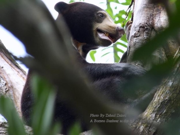 Borneo Wildlife Danum Valley Tour 3D 2N
