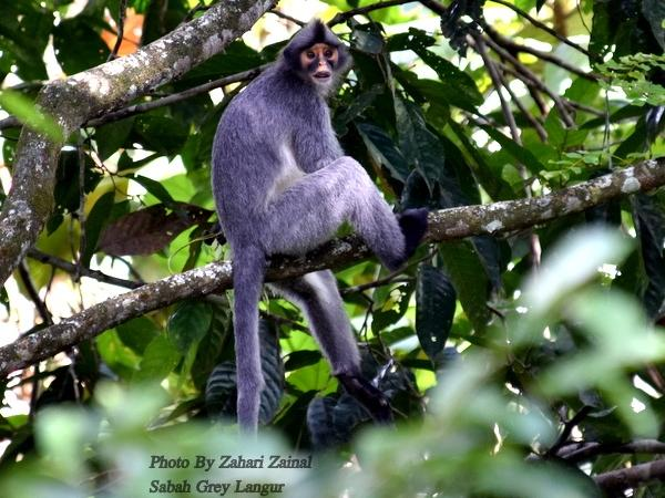 Borneo Wildlife Photography 11D 10N