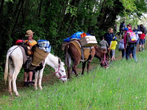 Walking with donkeys: family tour in Vicenza
