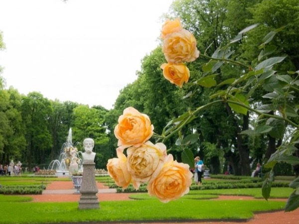 Summer seasonal St-Petersburg Private Tour
