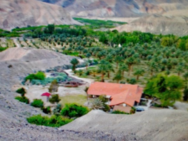 China Ranch Date Farm-Amargosa Valley-Vineyard in Pahrump