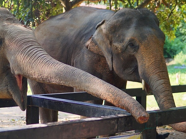Spend your day with elephants and soft trekking at Erawan waterfall