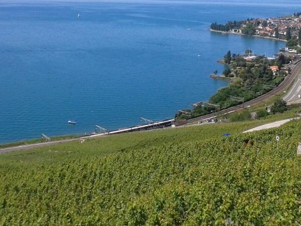 Private Wine tour in the UNESCO Lavaux Vineyards