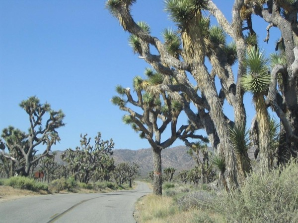 Mojave Excursion - A Private Day Trip from San Diego