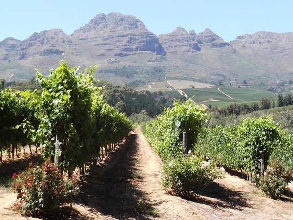 Private Cape Winelands tour including Stellenbosch and / or Franschhoek