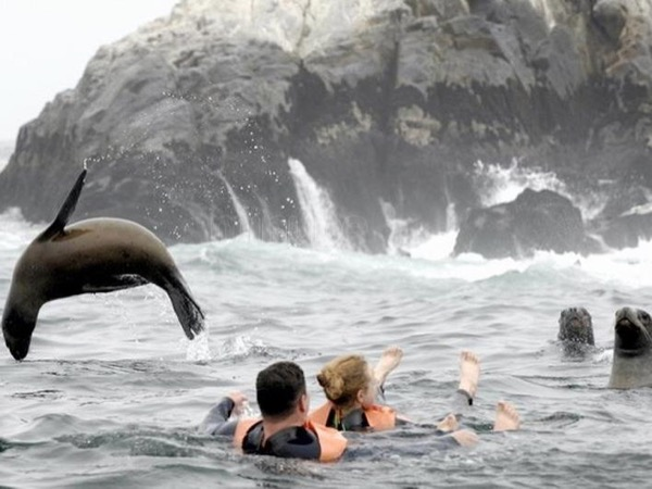 Callao: The Sea Lion Adventure and History