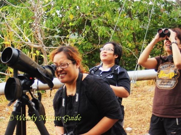 Langkawi Birdwatching Excursion for Half a Day (Morning Session)