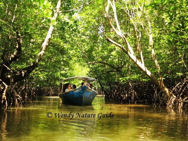 Langkawi Mangrove Boat Cruise