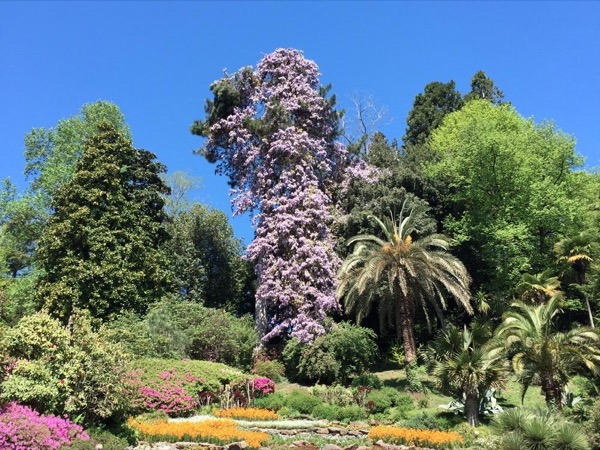 Lake Como cruise, Villa Carlotta botanical gardens + museum and Bellagio