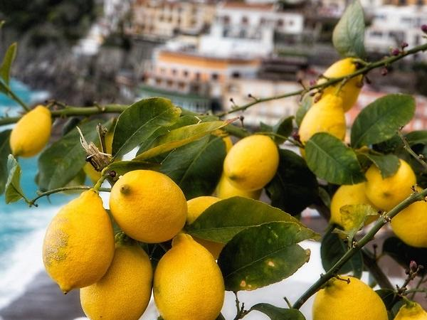 Enogastronomic Tour in Sorrento