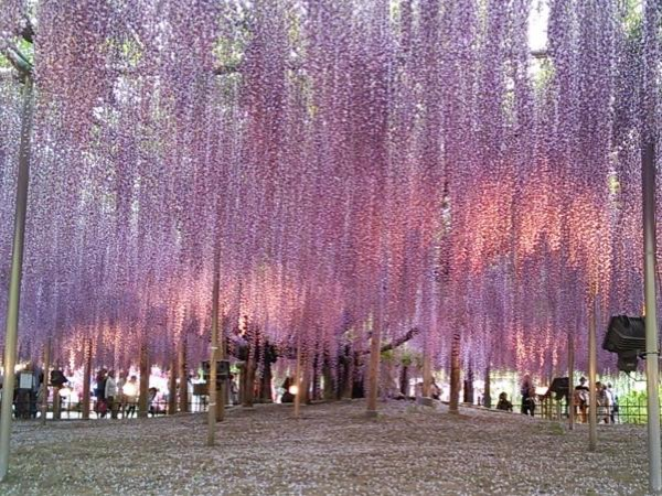 One Day Trip to Ashikaga - Ashikaga Flower Park