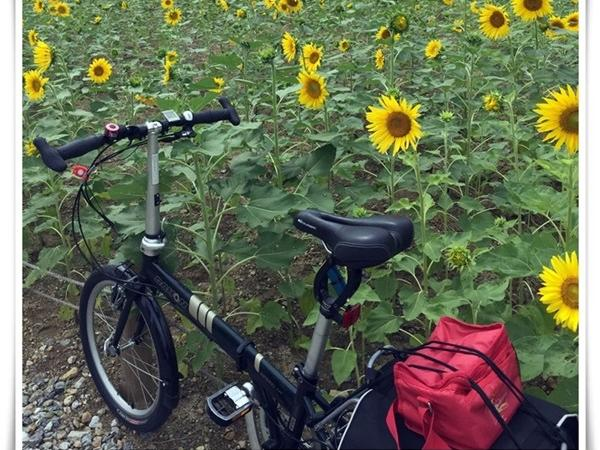 Bicycling along the Hangang river