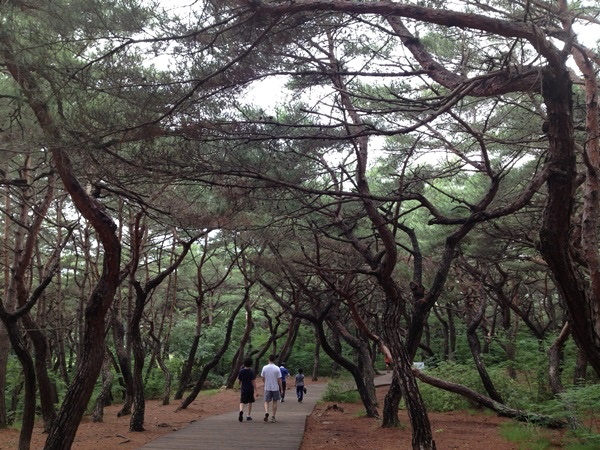 Seoul Private Hiking Tour
