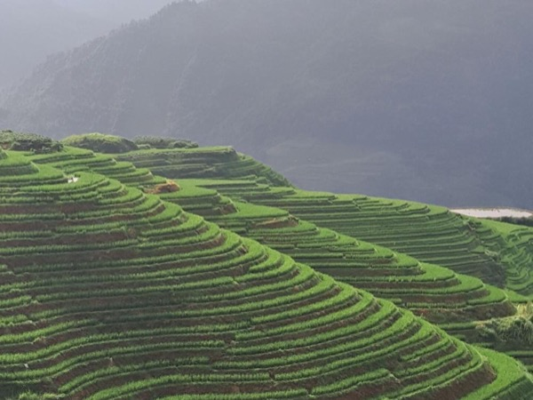 1 day Longji rice terraces private tour
