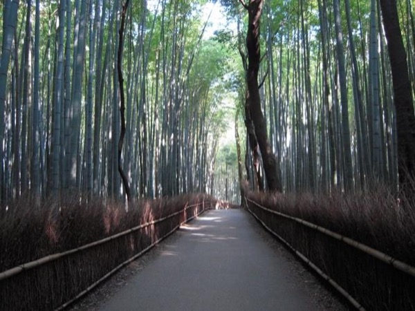 Arashiyama area & popular landmarks in Kyoto - Private Tour