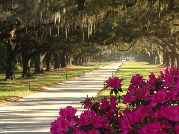 Historic Charleston and Boone Hall Plantation