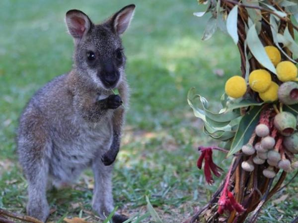 Hunter Valley Wineries and optional Wildlife Park.