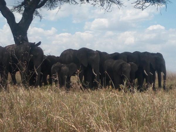 Amboseli to Tsavo