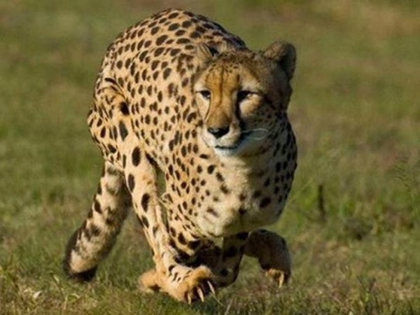De Wildt - the Anne van Dyk Cheetah Centre private tour