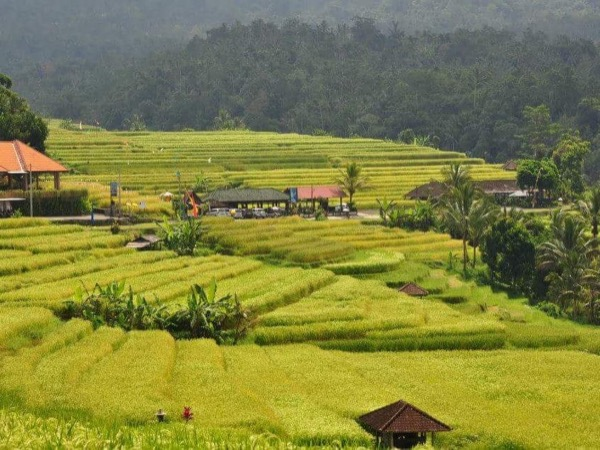 Beautiful Lake Temple and UNESCO Rice Field - a Private Tour