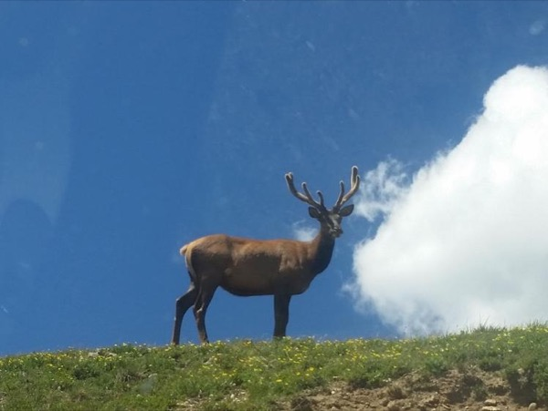 Ultimate Rocky Mountain National Park Private Tour