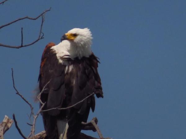 Ndole Bay Experience, Lake Tanganyika Zambia