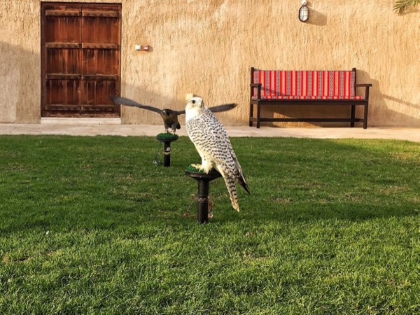 Falconry Tour in Old Dubai plus Transportation to/from Hotel