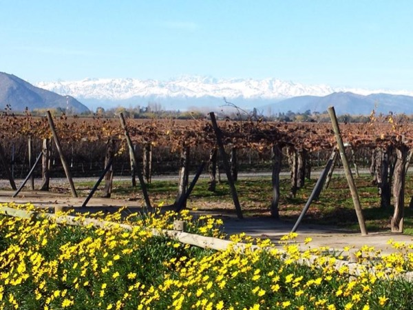 Premium Colchagua Valley Private tour