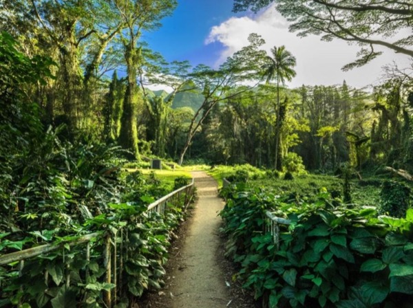Manoa Valley & Waterfall Hike