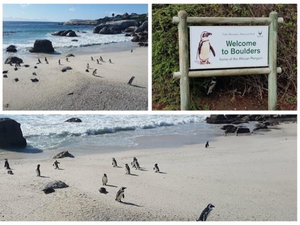 Full-day Tour to Cape Peninsula & Boulders Penguin Colony