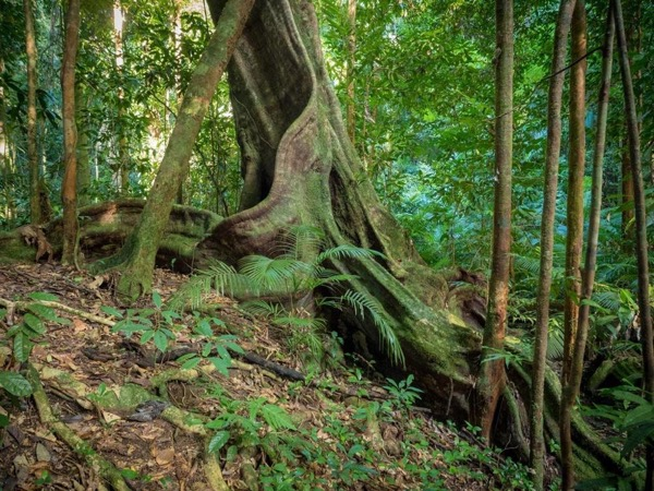 Exclusive Daintree Experience