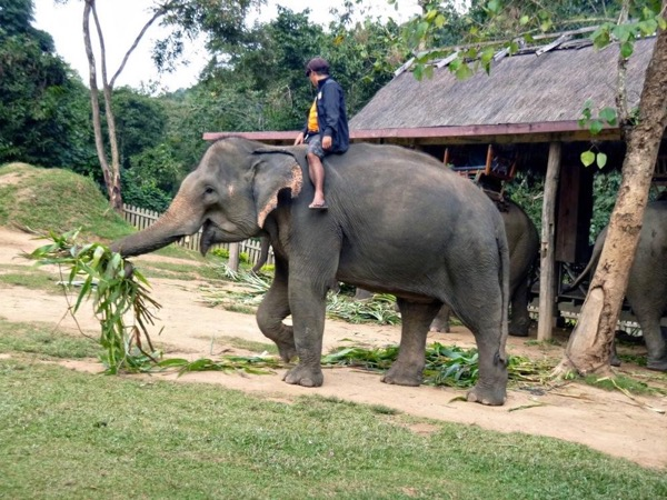 Luang Prabang Elephant Sanctuary Tour