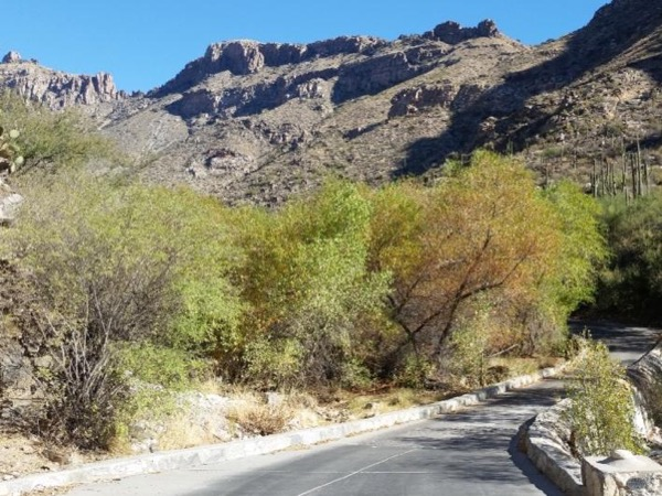 Sabino Canyon Recreation Area Private Tour