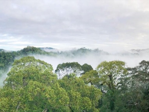 Ulu Temburong Rainforest Adventure