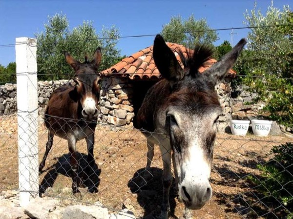 Olives & Donkeys - A Private Tour out of Kotor