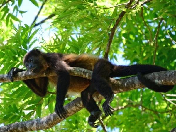 Puntarenas Rainforest & Beach Tour