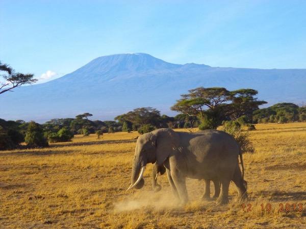 Amboseli National Park Private Safari
