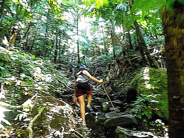 St.kitts Rainforest hike