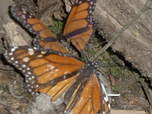 Private Tour to Monarch Butterfly and Valle de Bravo