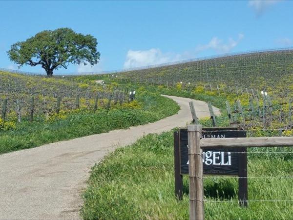 Biking and Tasting Tour of Santa Barbara Wine Country