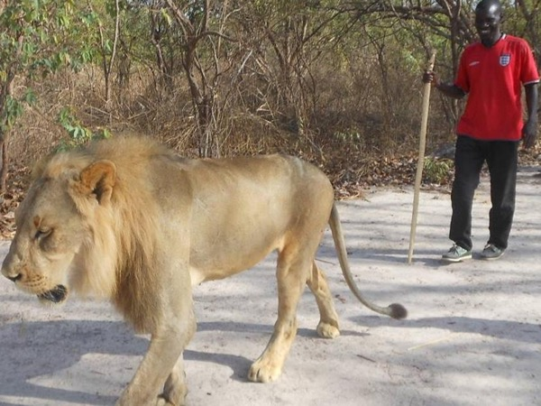 Two days, 1 night : Walk With The Lions in Fathala Animals Reserve