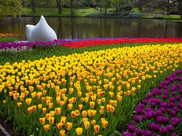 Keukenhof & Dutch Countryside Private Tour by Car