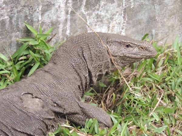 Sri Lanka Classic Nature tour - 7 Days
