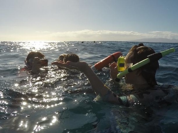 Oahu Hiking and Snorkeling/Swimming Private Tour