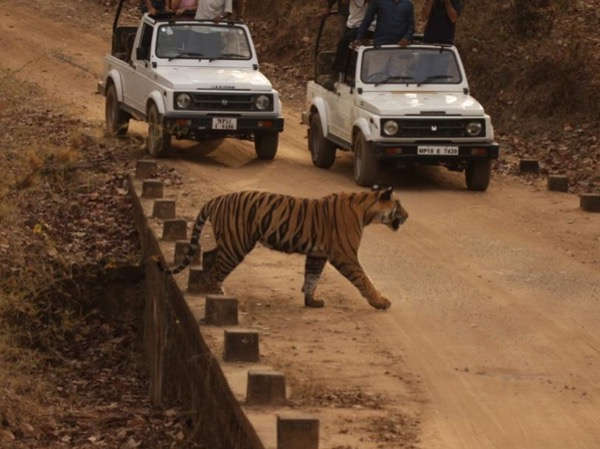 India's Golden Triangle Tour With Ranthambore Tiger Safari ( 06 NIGHTS / 07 DAYS )