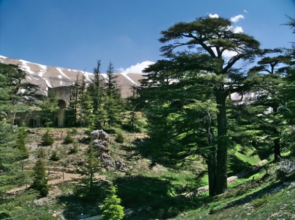 Mseilha Fort, Kozhaiya, Gibran Museum, Cedars of God Full-day Tour from Beirut