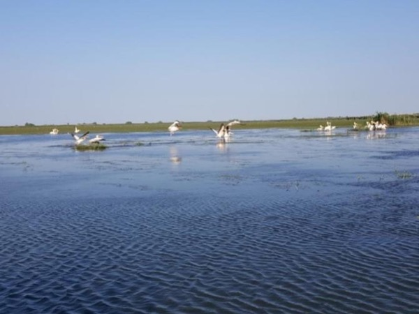 2 days Nature and Wildlife tour to Tulcea: gate to the bird paradise in Danube Delta