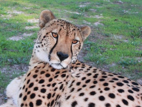 Personal Cheetah Encounter and Township