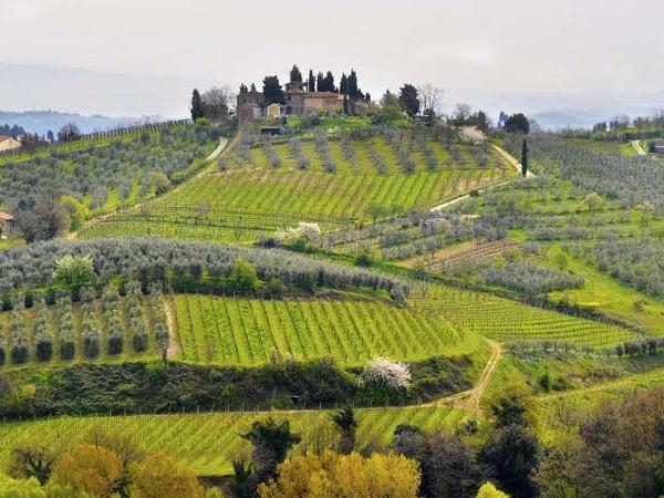 Chianti for a Day - A Day Trip From Florence