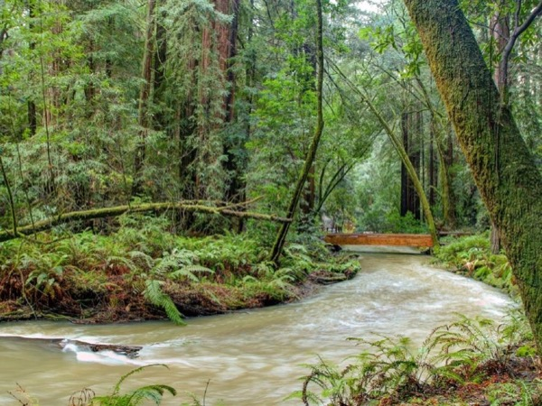 Private Muir Woods Luxury Tour - A Day Trip from San Francisco